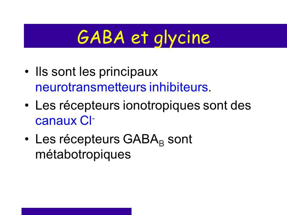 GABA et glycine Ils sont les principaux neurotransmetteurs inhibiteurs. Les récepteurs ionotropiques sont des canaux Cl - Les récepteurs GABA B sont m
