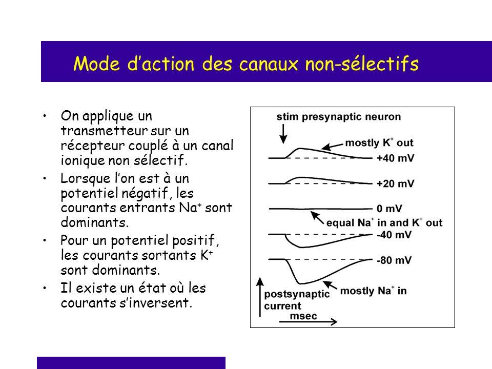 Mode daction des canaux non-sélectifs On applique un transmetteur sur un récepteur couplé à un canal ionique non sélectif. Lorsque lon est à un potent