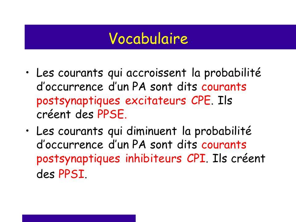 Vocabulaire Les courants qui accroissent la probabilité doccurrence dun PA sont dits courants postsynaptiques excitateurs CPE. Ils créent des PPSE. Le