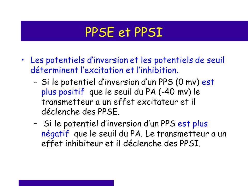 PPSE et PPSI Les potentiels dinversion et les potentiels de seuil déterminent lexcitation et linhibition. –Si le potentiel dinversion dun PPS (0 mv) e