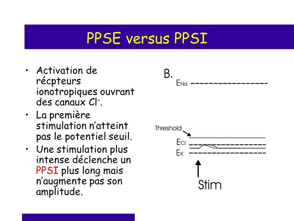 PPSE versus PPSI Activation de récpteurs ionotropiques ouvrant des canaux Cl -. La première stimulation natteint pas le potentiel seuil. Une stimulati