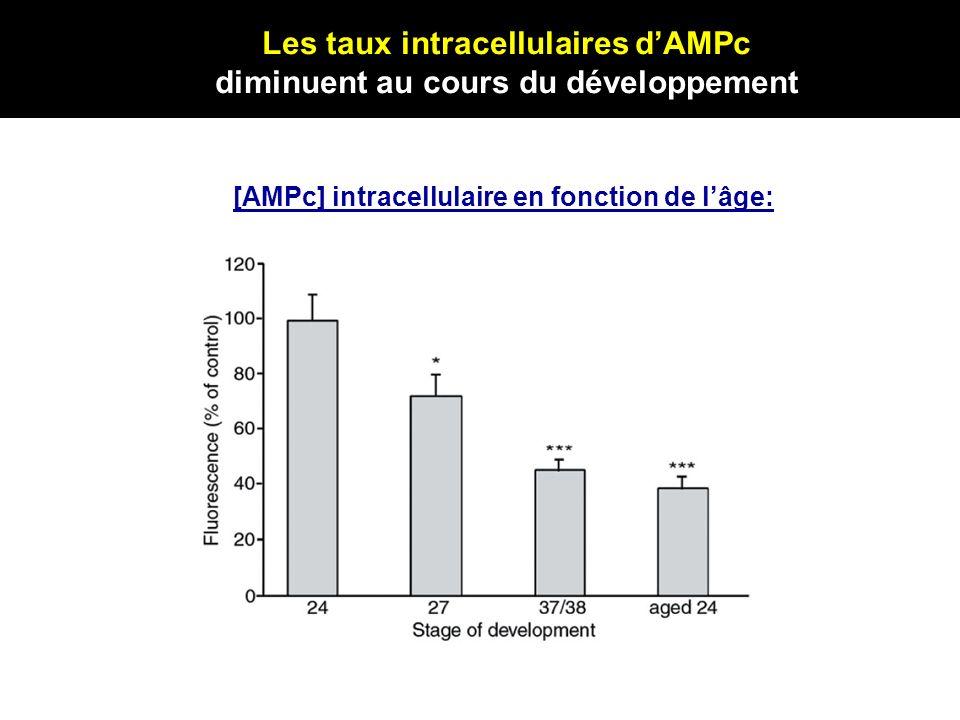 Les taux intracellulaires dAMPc diminuent au cours du développement [AMPc] intracellulaire en fonction de lâge: