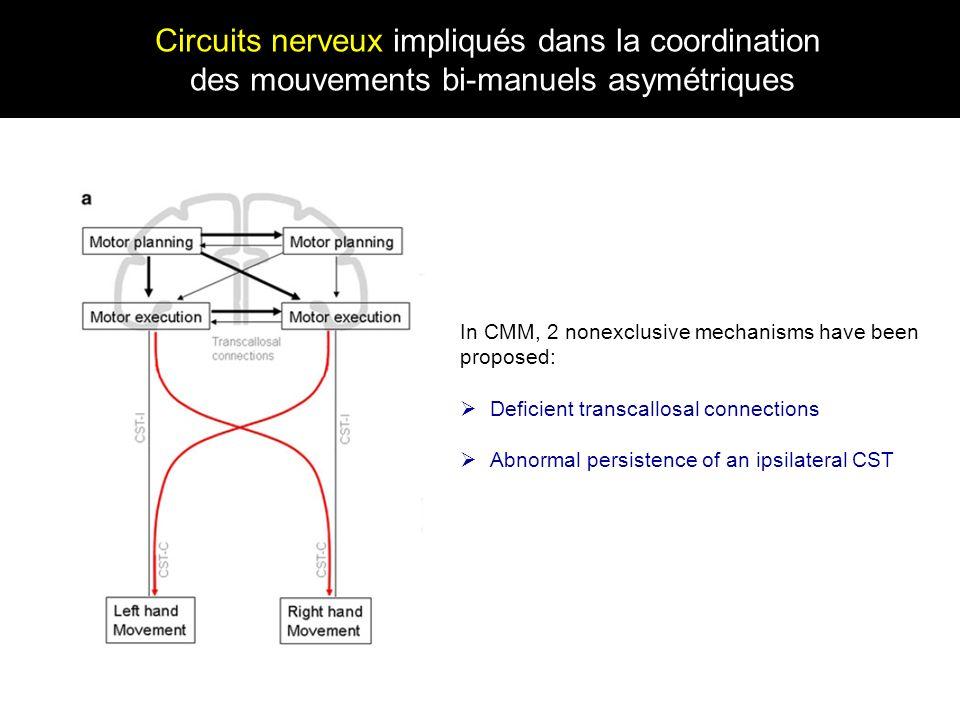 Circuits nerveux impliqués dans la coordination des mouvements bi-manuels asymétriques In CMM, 2 nonexclusive mechanisms have been proposed: Deficient