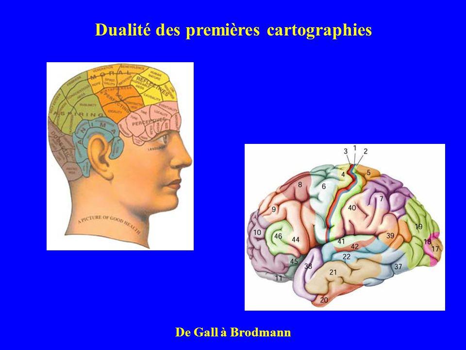Dualité des premières cartographies De Gall à Brodmann