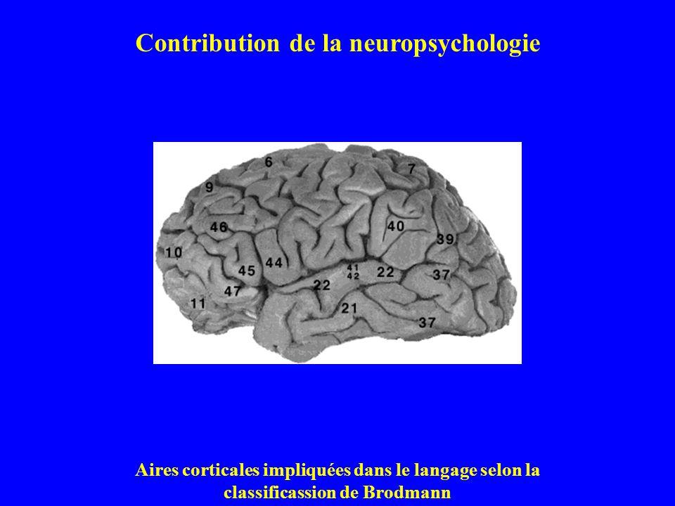 Contribution de la neuropsychologie Aires corticales impliquées dans le langage selon la classificassion de Brodmann