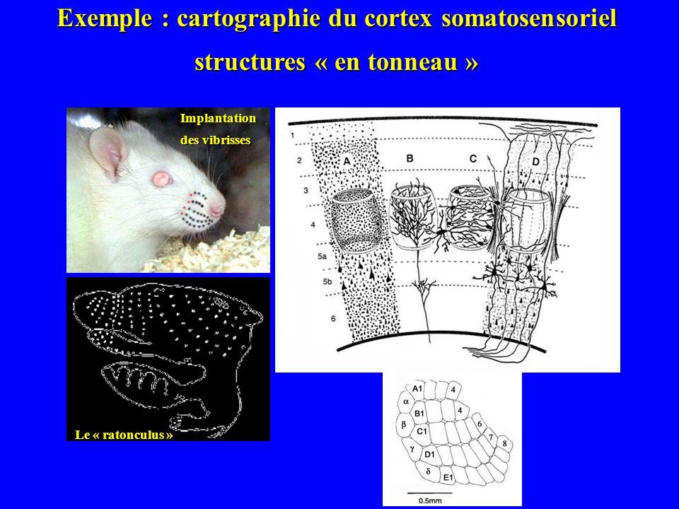 Daprès Koshiba et al., 2005 Identification des structures actives et de leurs interconnections Exemple dun traçage des voies visuelles chez loiseau.
