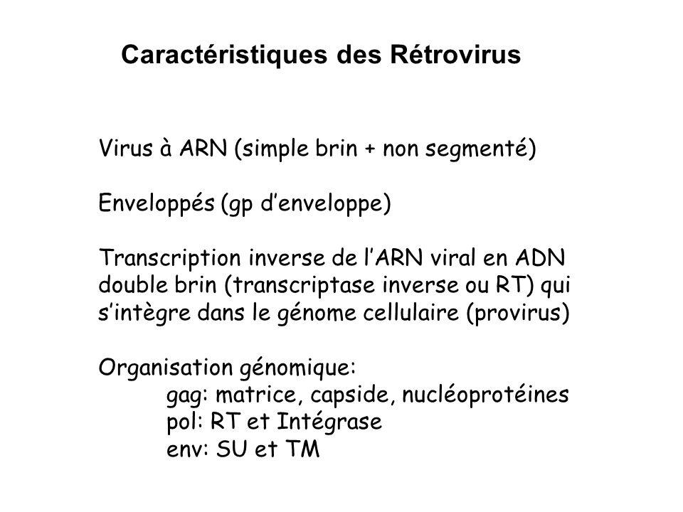 Caractéristiques des Rétrovirus Virus à ARN (simple brin + non segmenté) Enveloppés (gp denveloppe) Transcription inverse de lARN viral en ADN double