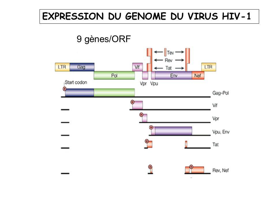 EXPRESSION DU GENOME DU VIRUS HIV-1 9 gènes/ORF