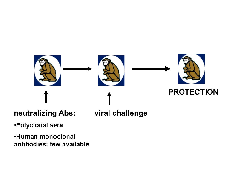 neutralizing Abs: Polyclonal sera Human monoclonal antibodies: few available viral challenge PROTECTION