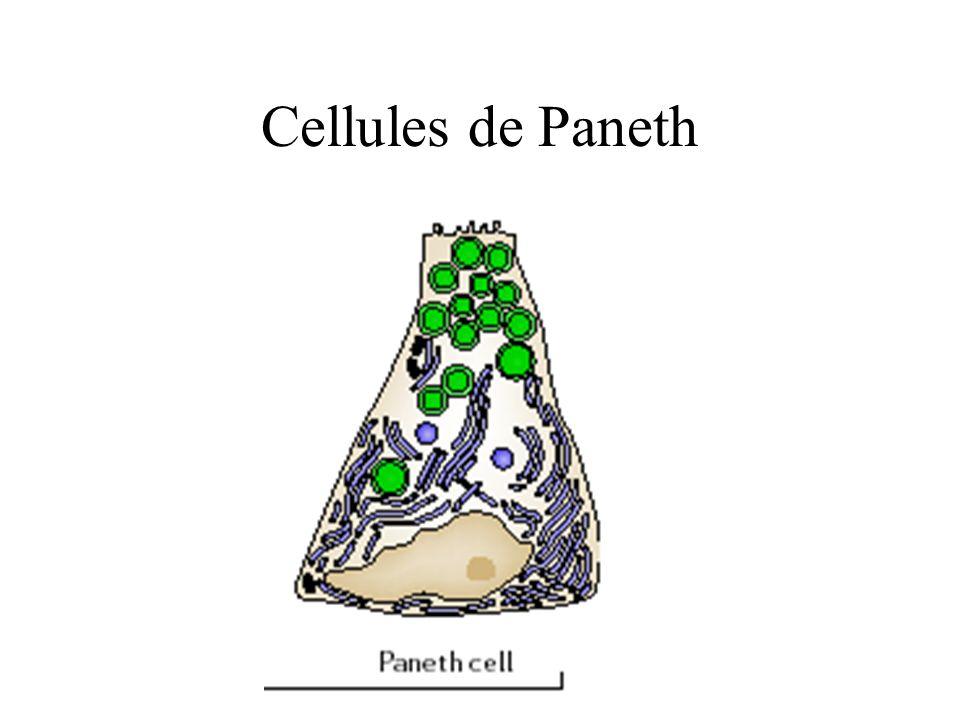 Cellules entéroendocrines