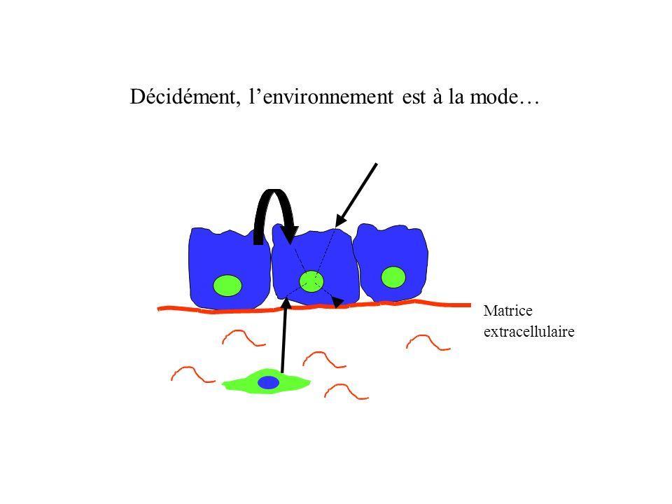 Quels facteurs induisent la différenciation cellulaire?