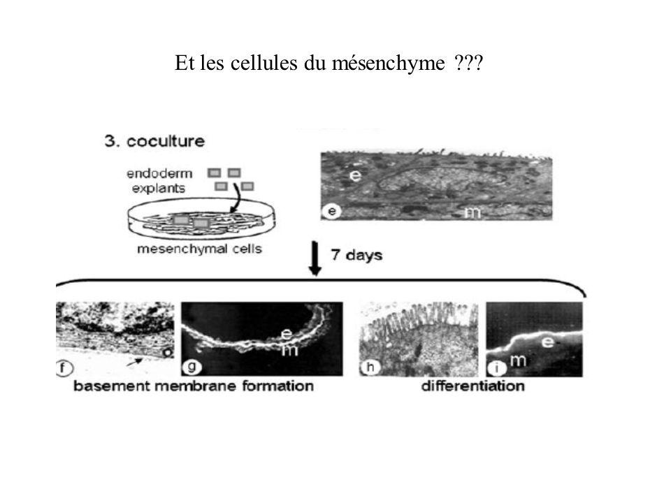 Décidément, lenvironnement est à la mode… Matrice extracellulaire