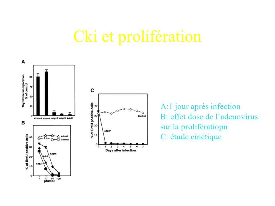 Brdu (bromodeoxyuridine) Ac X-Brdu Ac X-Ac X-Brdu