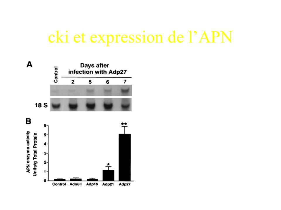 Comment faire pour déterminer si lexpression de la DPPIV est polarisée?