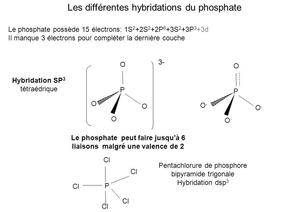 Les différentes hybridations du phosphate Le phosphate possède 15 électrons: 1S 2 +2S 2 +2P 6 +3S 2 +3P 3 +3d Il manque 3 électrons pour compléter la