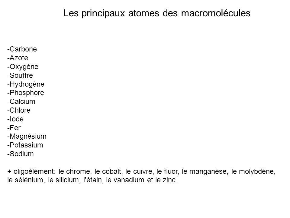 Les principaux atomes des macromolécules -Carbone -Azote -Oxygène -Souffre -Hydrogène -Phosphore -Calcium -Chlore -Iode -Fer -Magnésium -Potassium -So