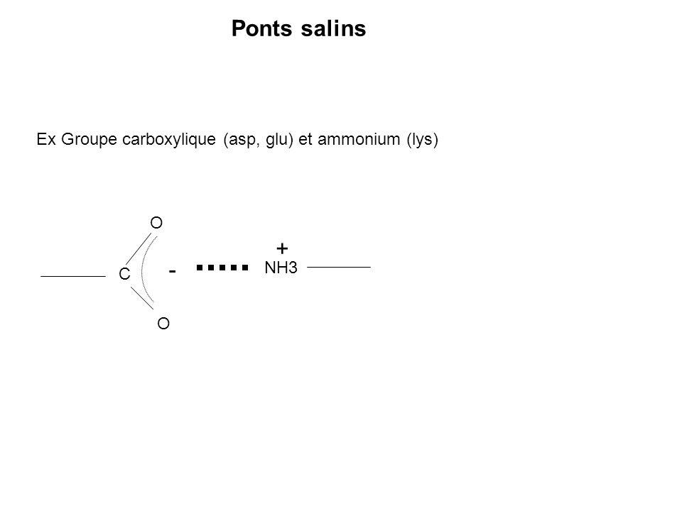 Ponts salins Ex Groupe carboxylique (asp, glu) et ammonium (lys) C O O - NH3 +