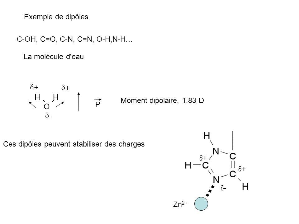 Exemple de dipôles C-OH, C=O, C-N, C=N, O-H,N-H… La molécule d'eau O HH + + - P Moment dipolaire, 1.83 D Ces dipôles peuvent stabiliser des charges -