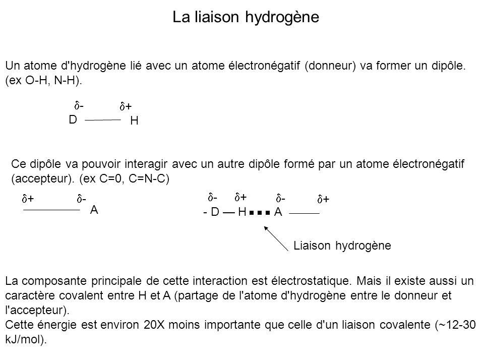 Un atome d'hydrogène lié avec un atome électronégatif (donneur) va former un dipôle. (ex O-H, N-H). D H - + Ce dipôle va pouvoir interagir avec un aut