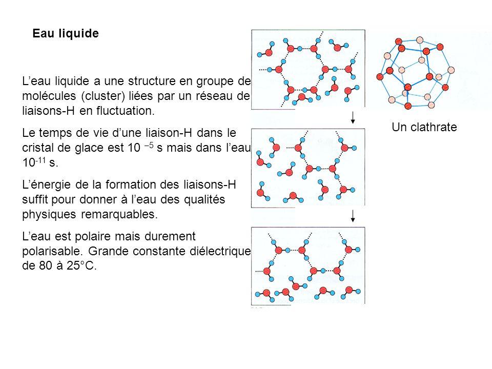 Eau liquide Leau liquide a une structure en groupe de molécules (cluster) liées par un réseau de liaisons-H en fluctuation. Le temps de vie dune liais