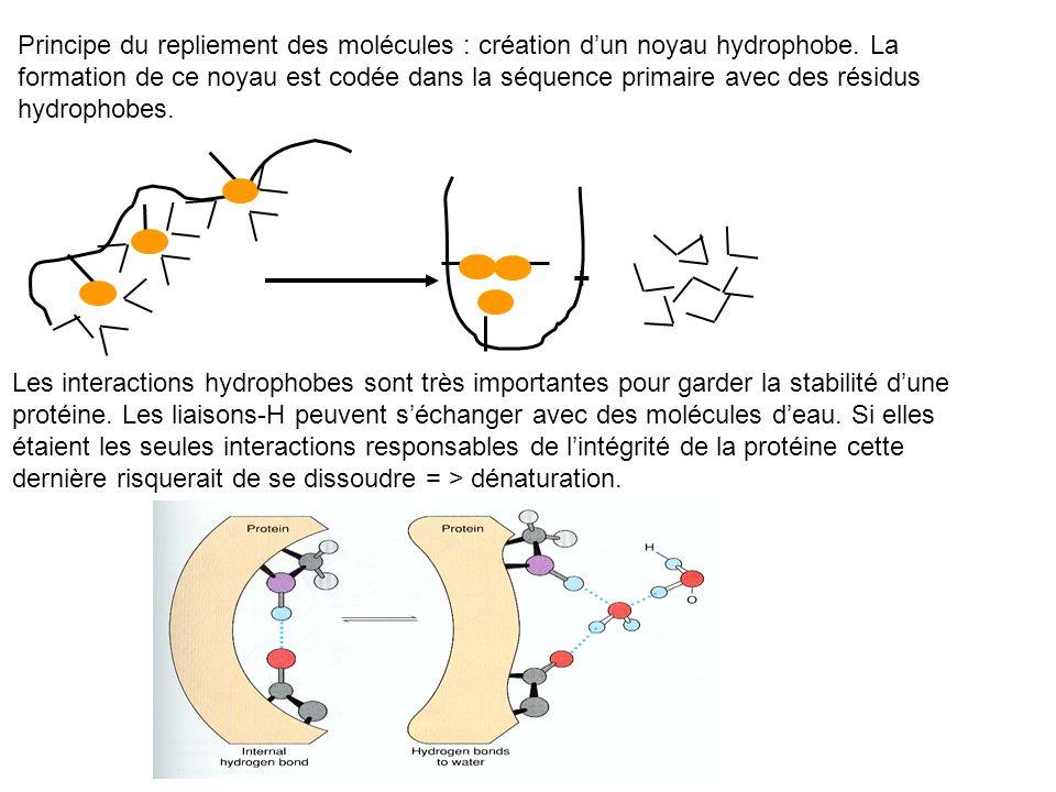 Principe du repliement des molécules : création dun noyau hydrophobe. La formation de ce noyau est codée dans la séquence primaire avec des résidus hy