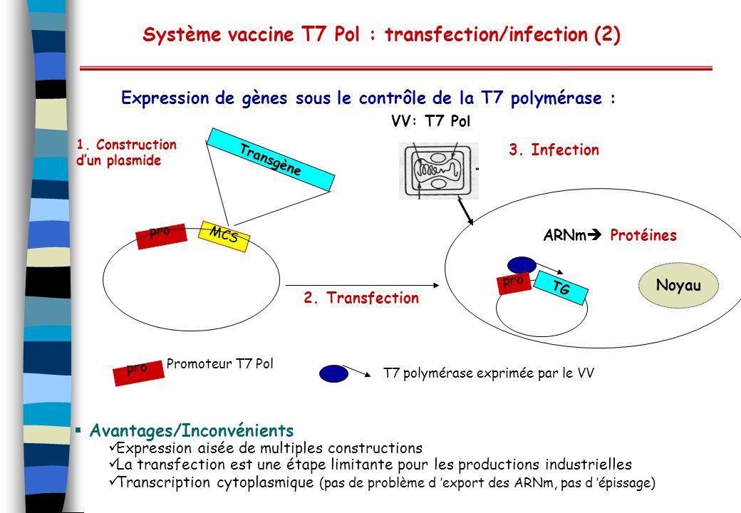 Système vaccine T7 Pol : transfection/infection (2) Expression de gènes sous le contrôle de la T7 polymérase : Avantages/Inconvénients Expression aisé
