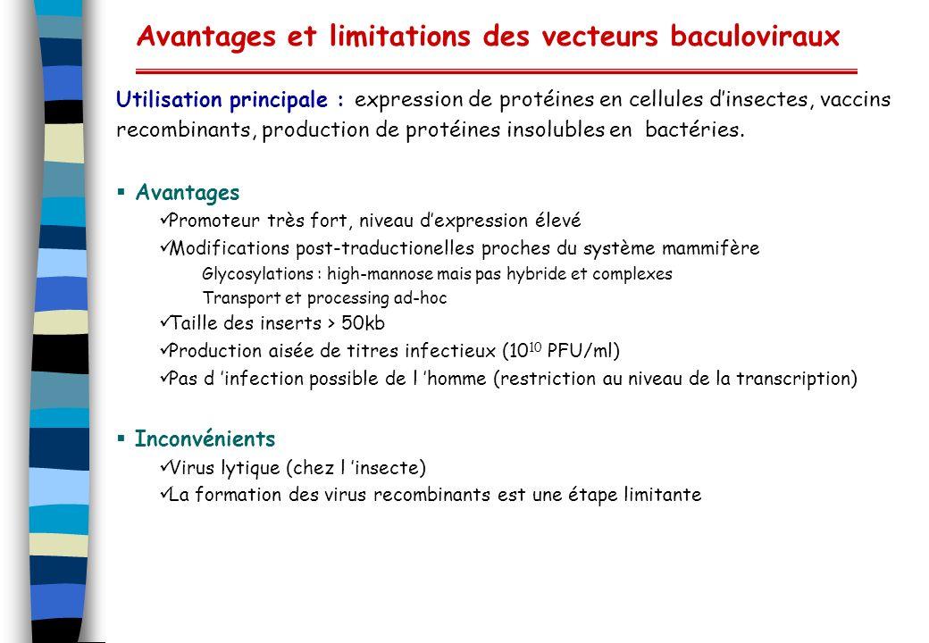 Avantages et limitations des vecteurs baculoviraux Utilisation principale : expression de protéines en cellules dinsectes, vaccins recombinants, produ