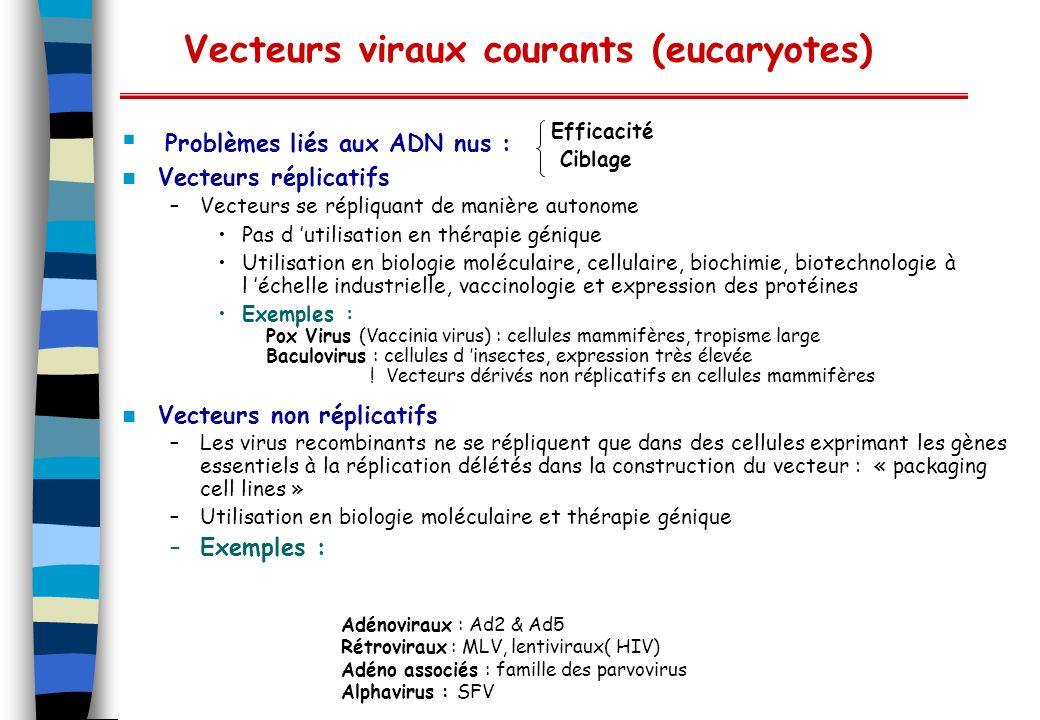 Vecteurs viraux courants (eucaryotes) Vecteurs réplicatifs –Vecteurs se répliquant de manière autonome Pas d utilisation en thérapie génique Utilisati