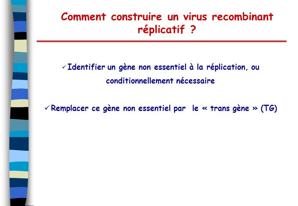 Comment construire un virus recombinant réplicatif ? Identifier un gène non essentiel à la réplication, ou conditionnellement nécessaire Remplacer ce