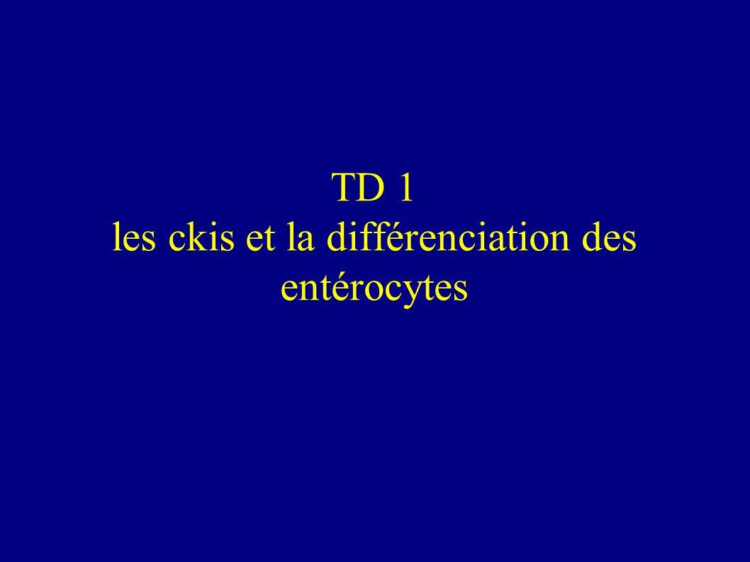 TD 1 les ckis et la différenciation des entérocytes