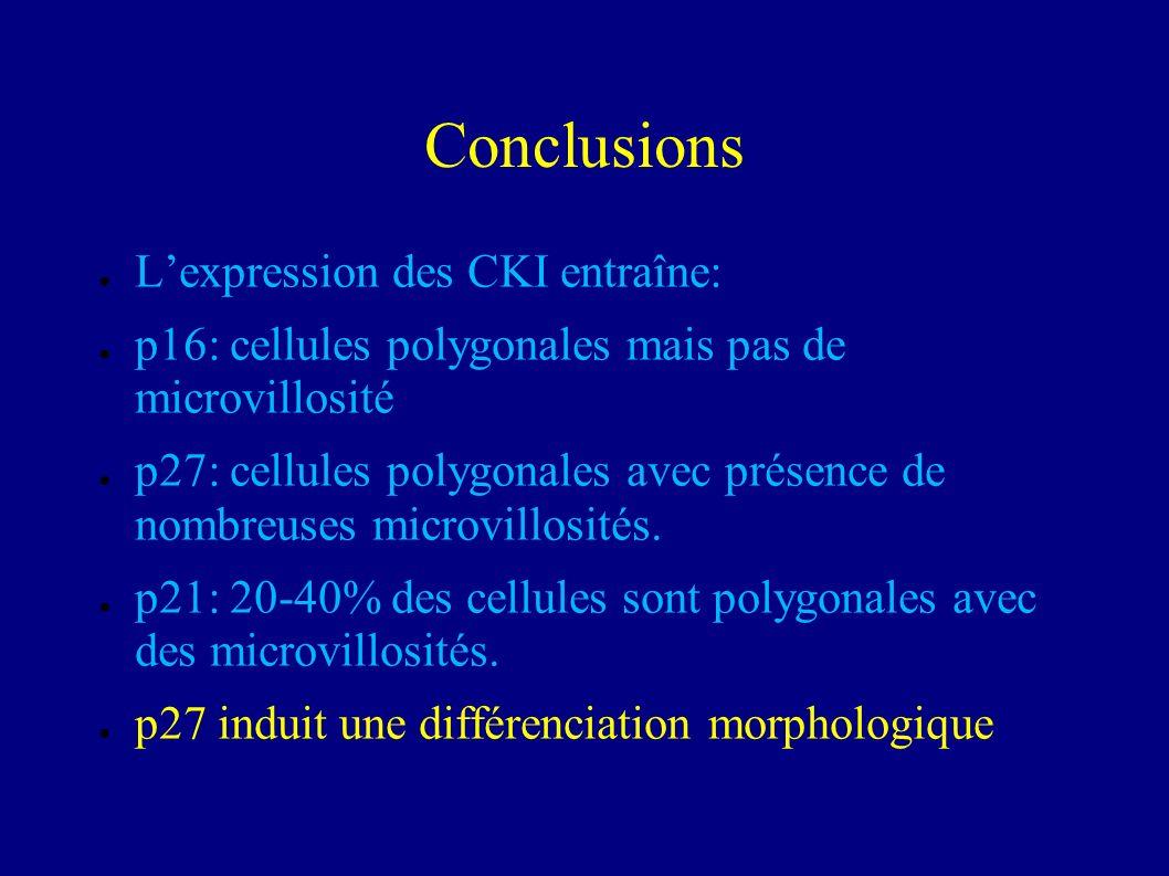 Cki et morphologie