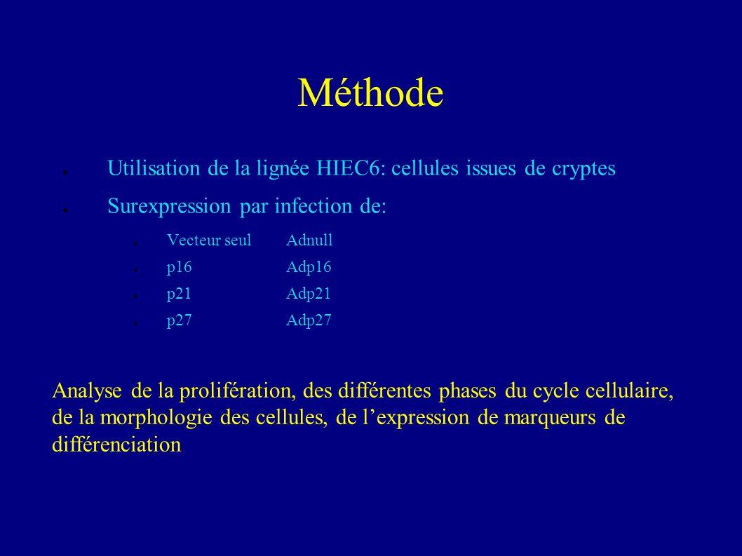 Méthode Utilisation de la lignée HIEC6: cellules issues de cryptes Surexpression par infection de: Vecteur seulAdnull p16Adp16 p21Adp21 p27Adp27 Analyse de la prolifération, des différentes phases du cycle cellulaire, de la morphologie des cellules, de lexpression de marqueurs de différenciation