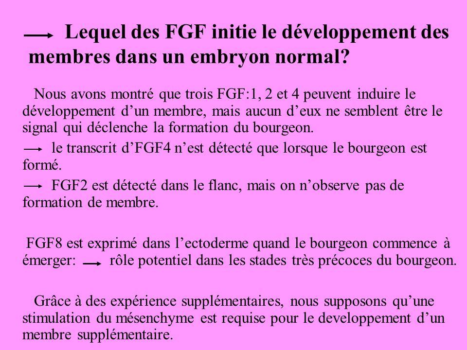 Lequel des FGF initie le développement des membres dans un embryon normal.