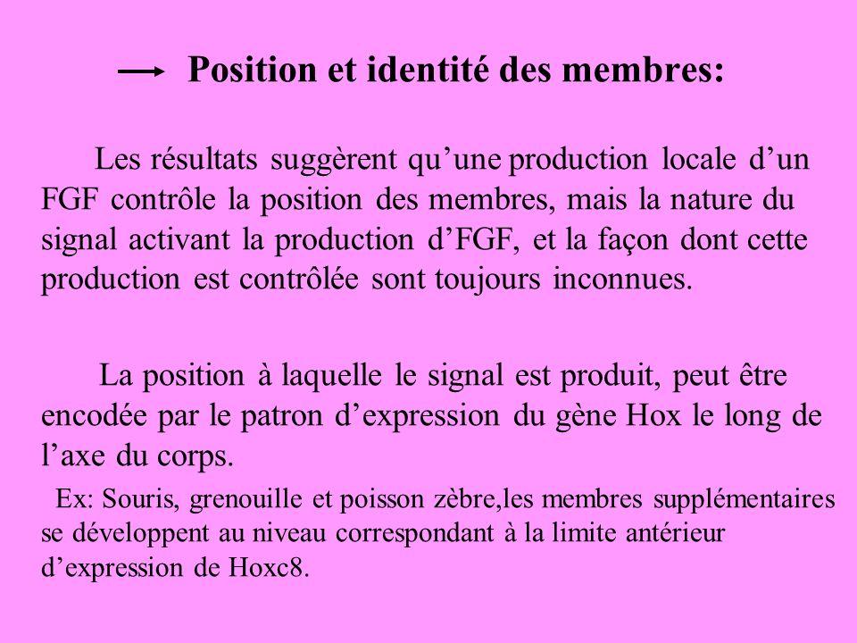 Position et identité des membres: Les résultats suggèrent quune production locale dun FGF contrôle la position des membres, mais la nature du signal activant la production dFGF, et la façon dont cette production est contrôlée sont toujours inconnues.
