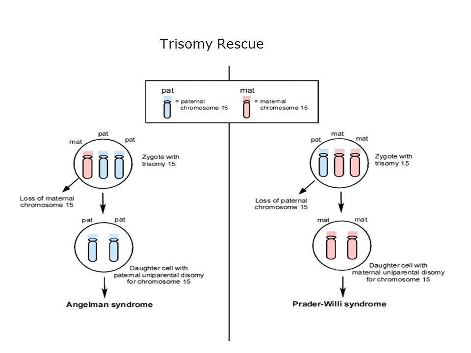 Trisomy Rescue