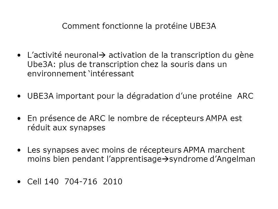 Comment fonctionne la protéine UBE3A Lactivité neuronal activation de la transcription du gène Ube3A: plus de transcription chez la souris dans un env