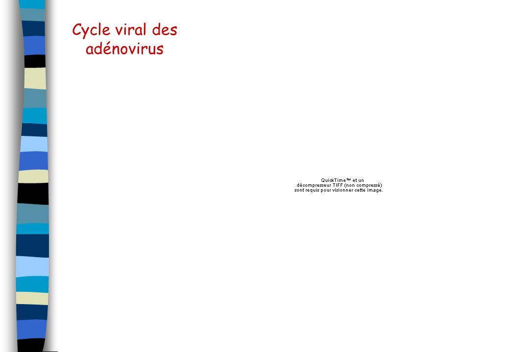 Cycle viral des adénovirus