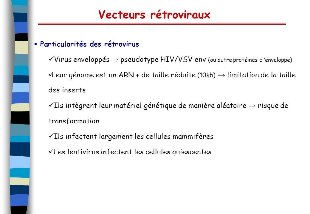 Vecteurs adénoviraux (Ad2, Ad5) Virus non enveloppés génome ADN 2 brins linéaires 36kb infectent les cellules quiecentes tropisme large (récepteur aux intégrines v 5 et v 3 ) niveau dexpression élevée