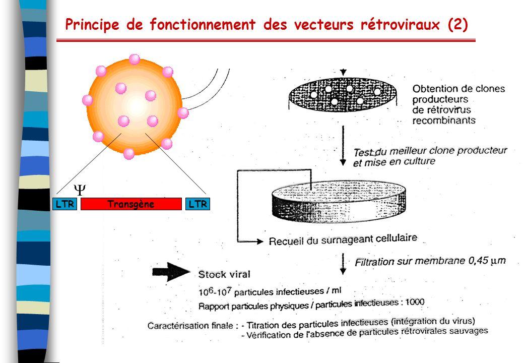 Formation de virus recombinants Particularité des vecteurs adéno-associés : Tous les gènes viraux sont délétés Les « packaging cell lines » sont complémentés pour les protéines virales et helper Transfection Noyau MCS Transgène Cellules 293 (expriment E1) Virus adéno-associé recombinant ITR Promoteur Gènes rep Gènes cap ITR Poly A Plasmide E2 et E4 adénovirus