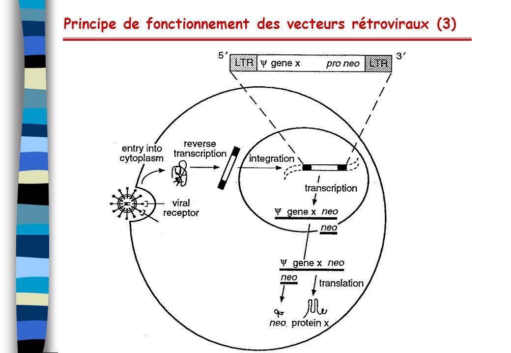 Principe de fonctionnement des vecteurs rétroviraux (3)