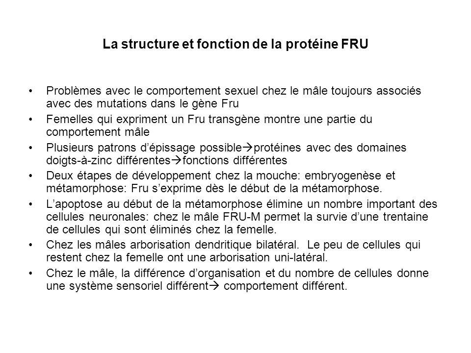 La structure et fonction de la protéine FRU Problèmes avec le comportement sexuel chez le mâle toujours associés avec des mutations dans le gène Fru F