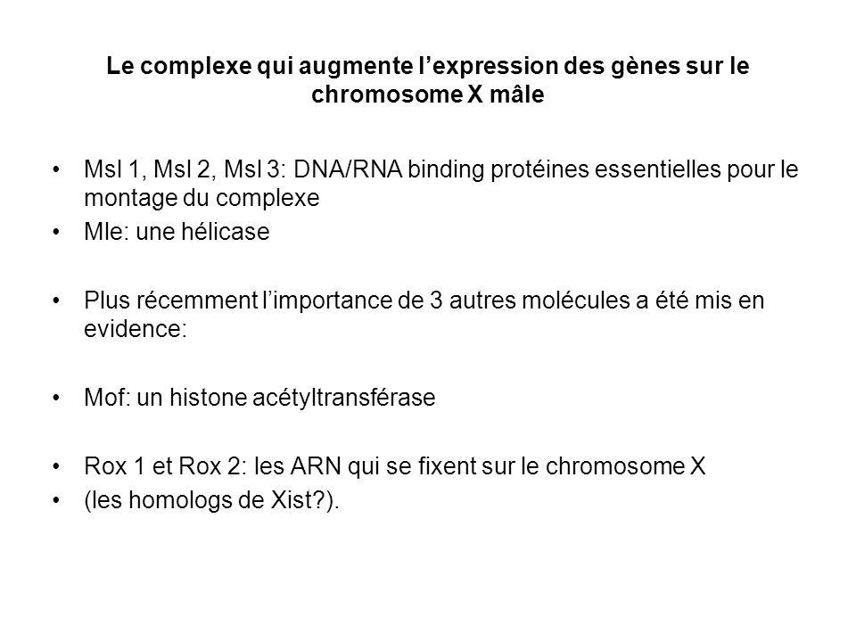 Le complexe qui augmente lexpression des gènes sur le chromosome X mâle Msl 1, Msl 2, Msl 3: DNA/RNA binding protéines essentielles pour le montage du