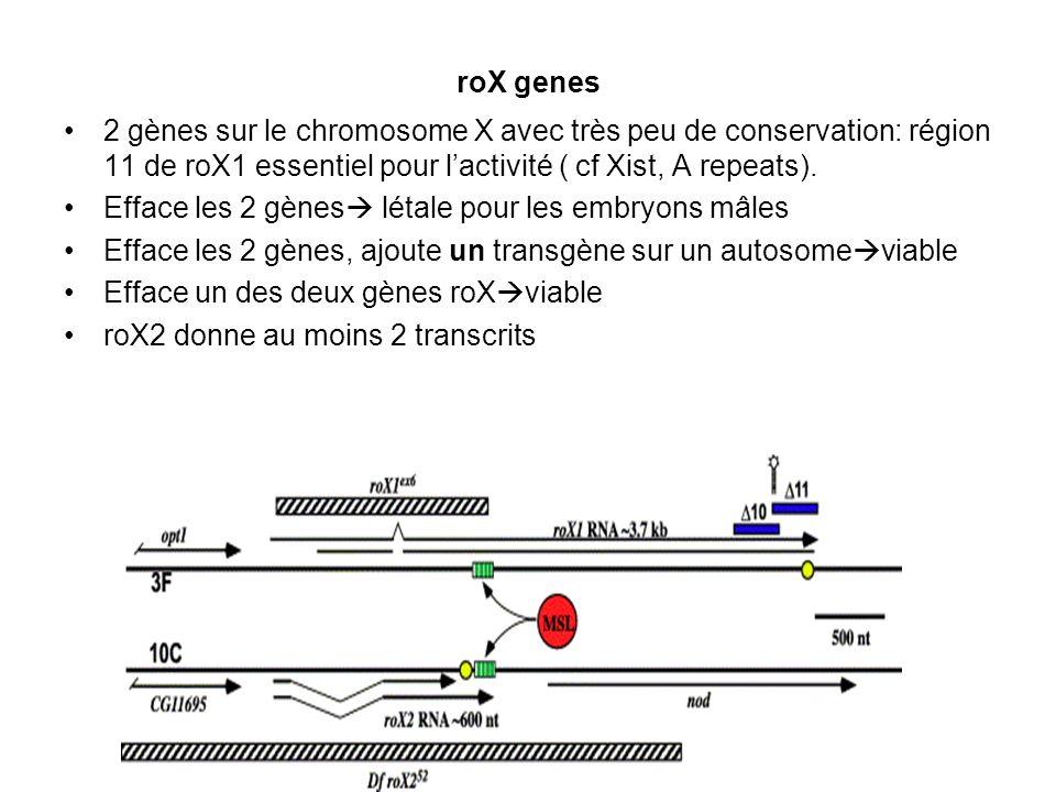 roX genes 2 gènes sur le chromosome X avec très peu de conservation: région 11 de roX1 essentiel pour lactivité ( cf Xist, A repeats). Efface les 2 gè