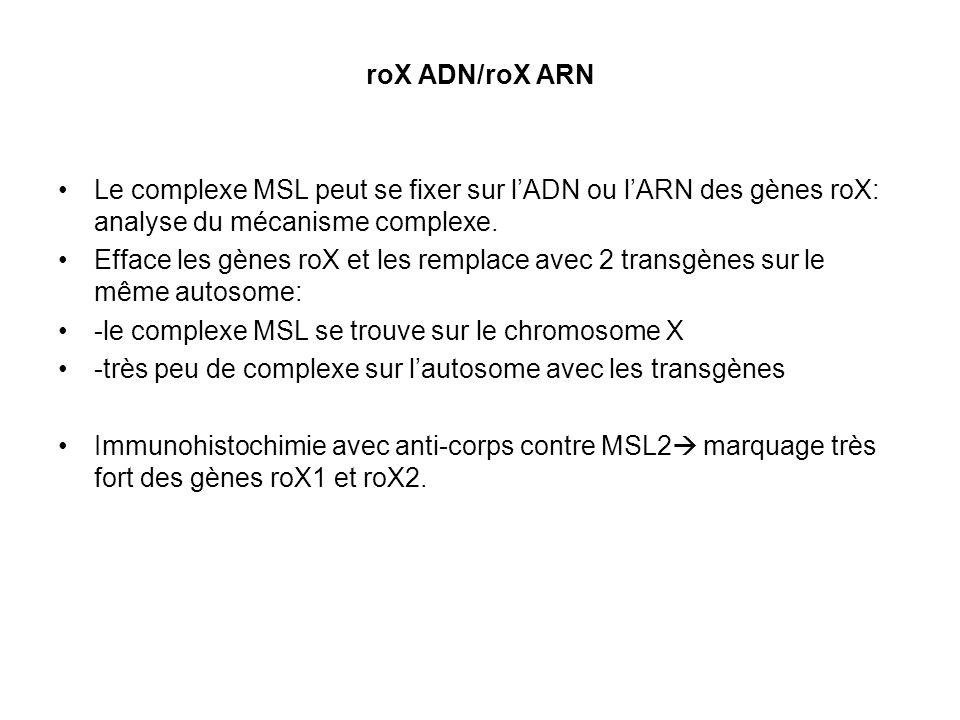 roX ADN/roX ARN Le complexe MSL peut se fixer sur lADN ou lARN des gènes roX: analyse du mécanisme complexe. Efface les gènes roX et les remplace avec