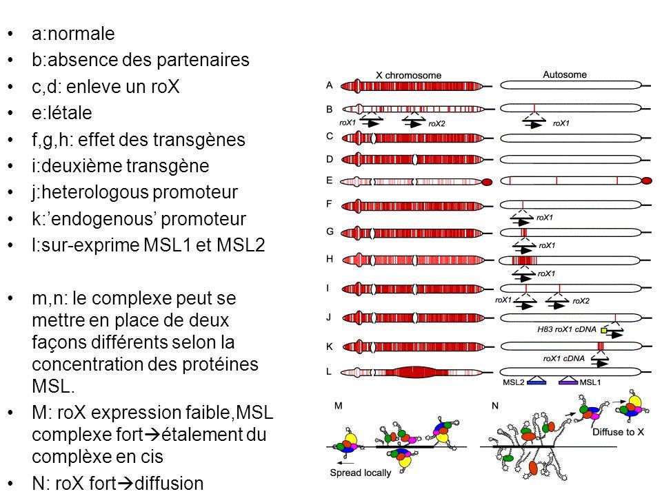 a:normale b:absence des partenaires c,d: enleve un roX e:létale f,g,h: effet des transgènes i:deuxième transgène j:heterologous promoteur k:endogenous