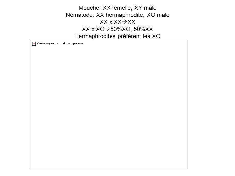 Mouche: XX femelle, XY mâle Nématode: XX hermaphrodite, XO mâle XX x XX XX XX x XO 50%XO, 50%XX Hermaphrodites préfèrent les XO