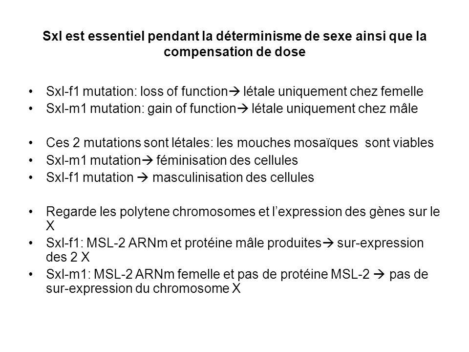 Sxl est essentiel pendant la déterminisme de sexe ainsi que la compensation de dose Sxl-f1 mutation: loss of function létale uniquement chez femelle S