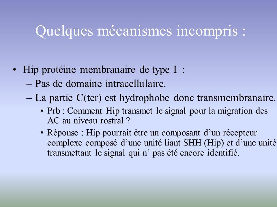 Quelques mécanismes incompris : Hip protéine membranaire de type I : –Pas de domaine intracellulaire. –La partie C(ter) est hydrophobe donc transmembr