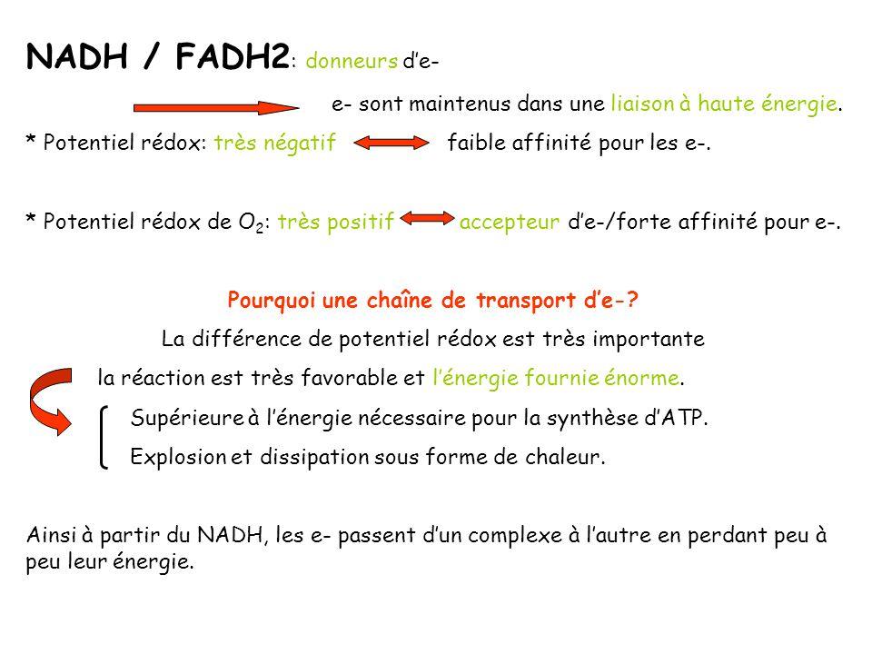 NADH / FADH2 : donneurs de- e- sont maintenus dans une liaison à haute énergie. * Potentiel rédox: très négatif faible affinité pour les e-. * Potenti