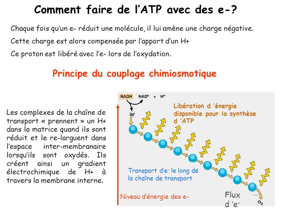 Matrice Espace inter- membranaire Membrane interne Complexe IV Niveau dénergie des e - Libération de H + Force proton motrice Accepteur final de - La synthèse d ATP